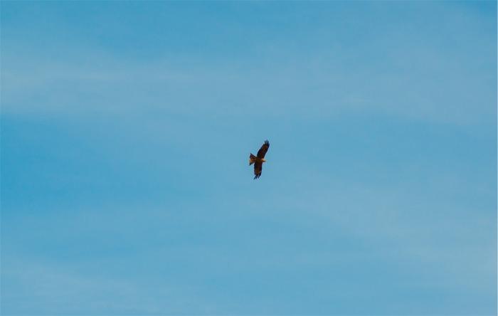 Águila calzada, Nikon D800, 300mm, ISO400, f/9, 1/600s.